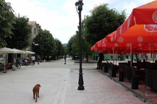 афганская борзая собака афган: описание породы, характер и условия содержания